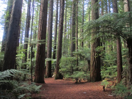 5- Redwoods