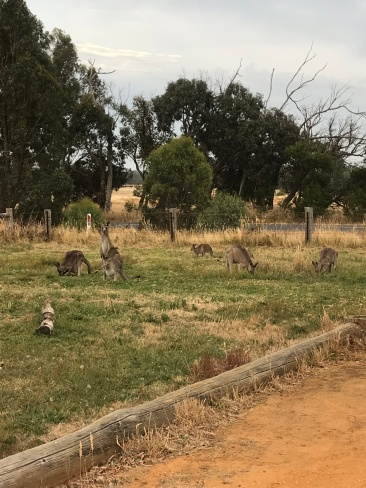 Roos outside the pub