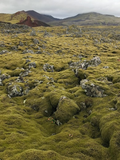 Earth's carpet!